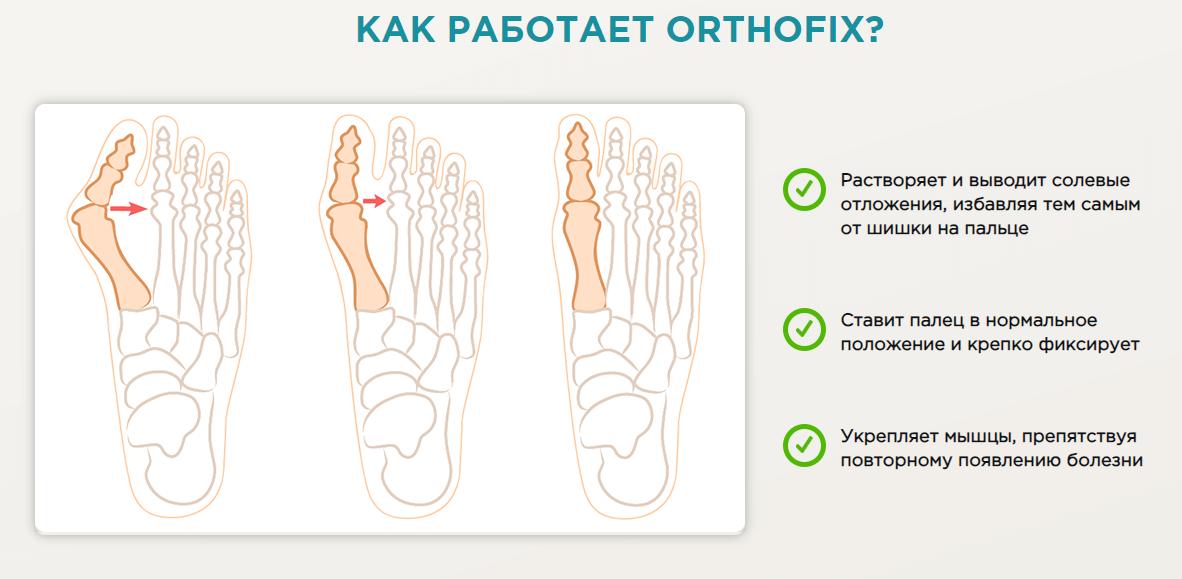 состав ортофикс